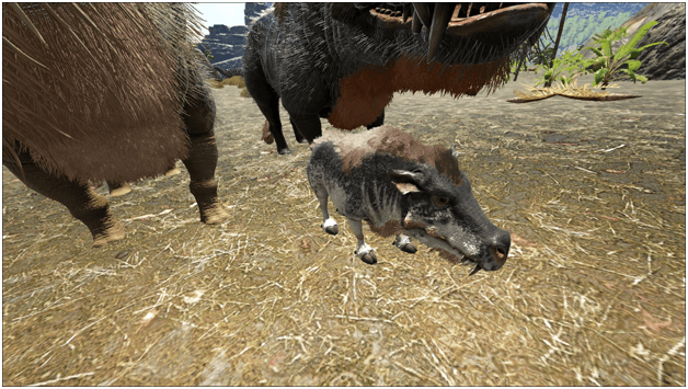 Ark Daeodon Guide Abilities Taming Food Saddle Breeding Drops Location Progametalk They need to lower there baby food drop rate and with that they need to make it so baby daeodon gets 50 food from raw. ark daeodon guide abilities taming