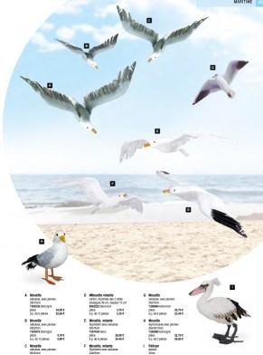 Décoration oiseaux maritimes