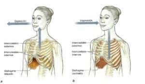 Procesos respiratorios