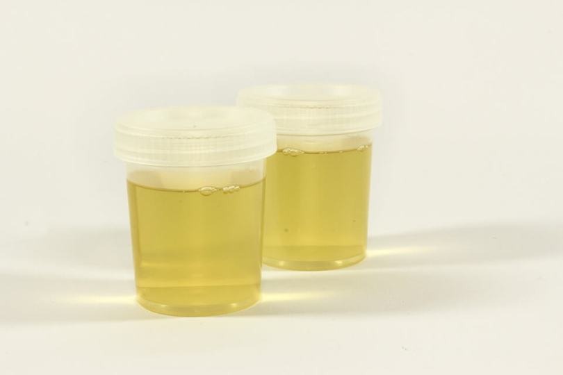 synthetic urine before you make a purchase