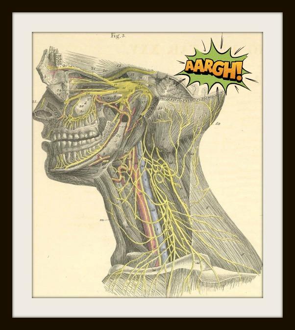 anatomy b b
