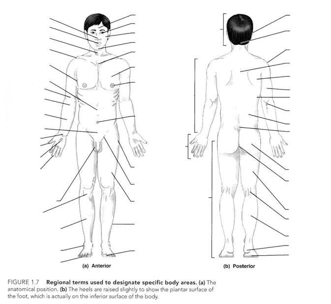 CH 1: Human Body Orientation