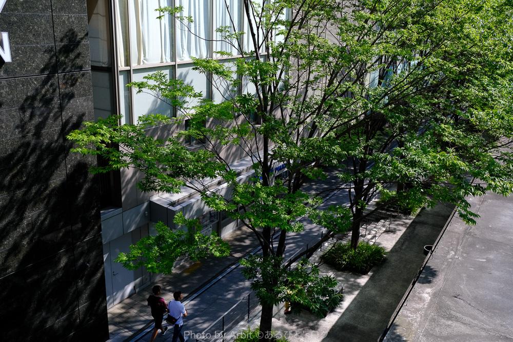 大阪駅横の緑