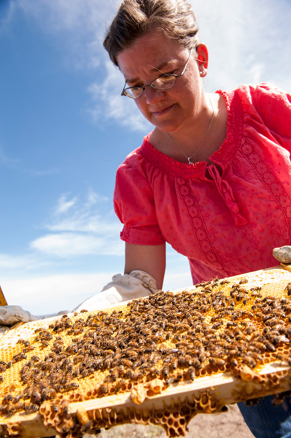 Oregon State University researchers introduced artificial larval pheromones to hives to make bees sense there is a large brood of larvae that needs feeding