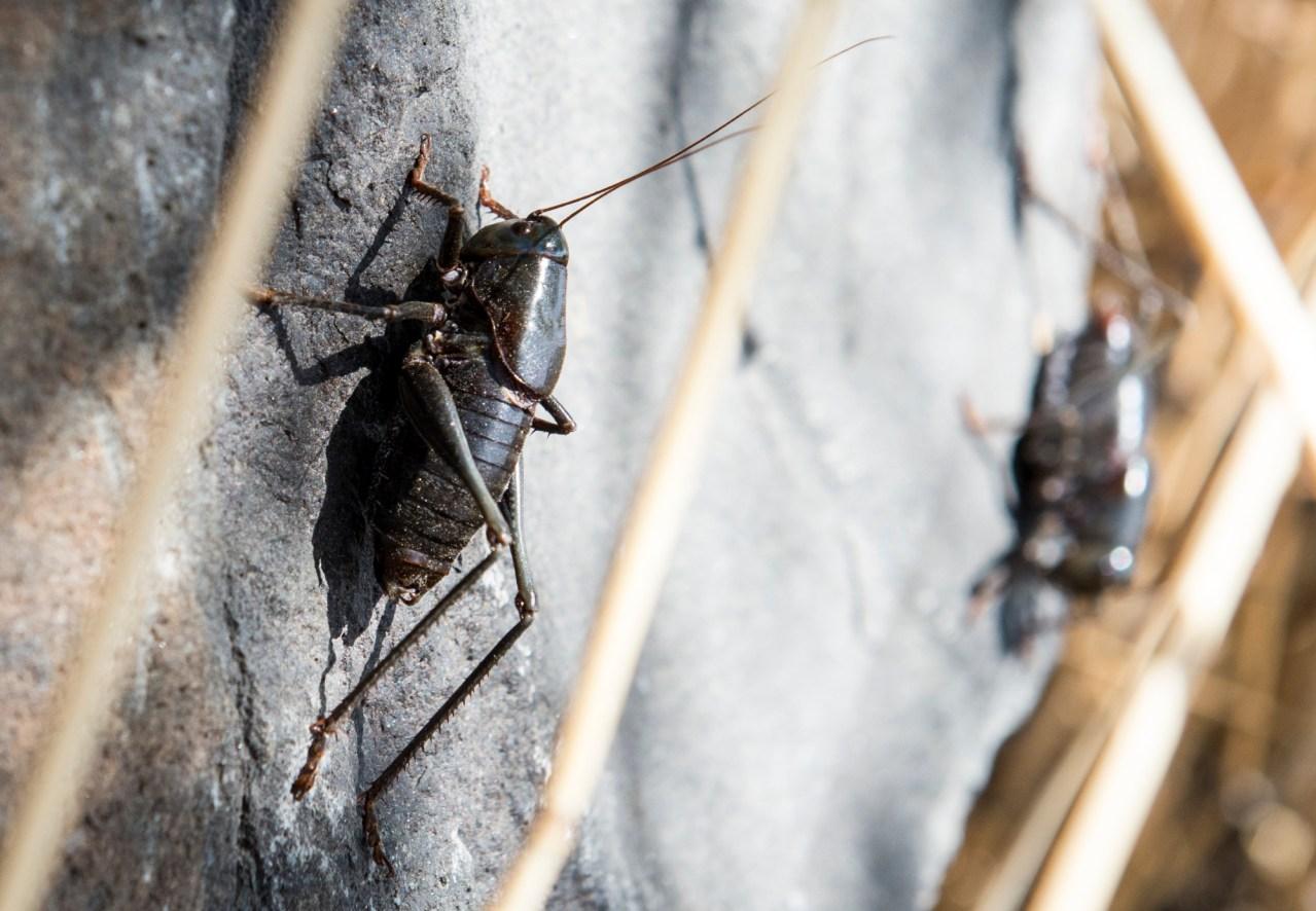 Crickets everywhere