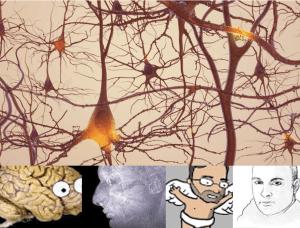 7 Sceptische opmerkingen over neuroplasticiteit
