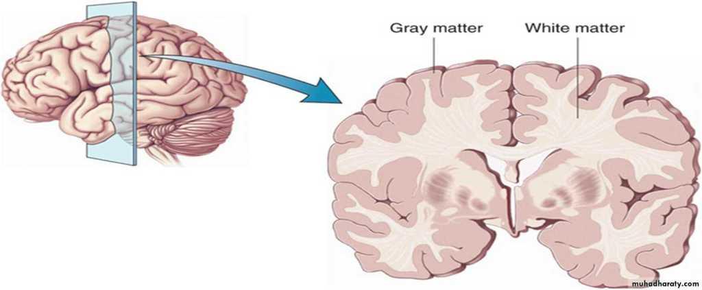 Neuroplasticiteit bij ouderen