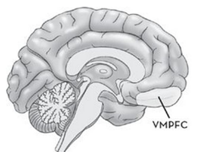 Zelfdeterminatietheorie en de hersenen