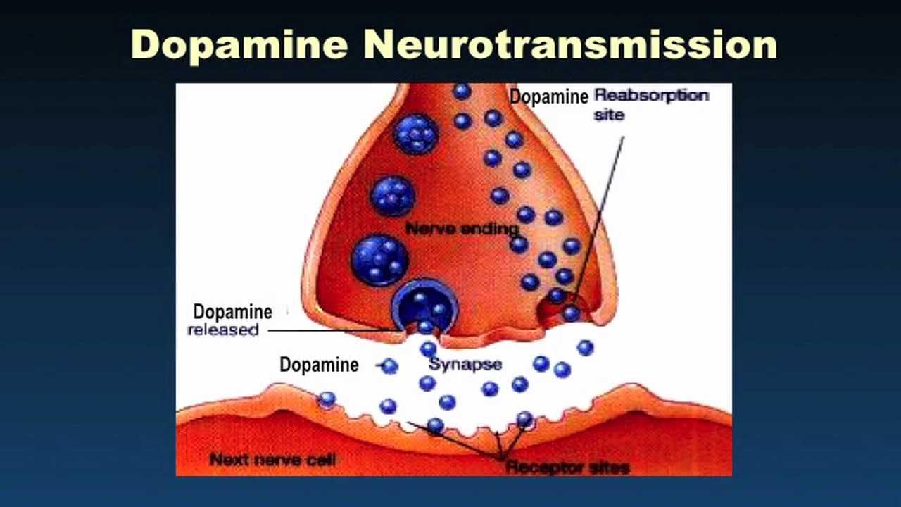 dopamine fitness