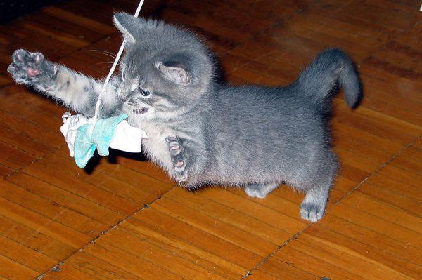 Котёнок за игрой