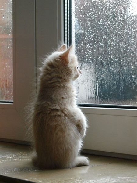 بچه گربه از پنجره به بیرون نگاه می کند