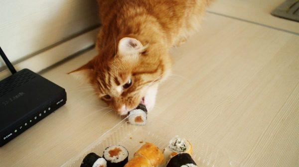 Gato come de un tazón