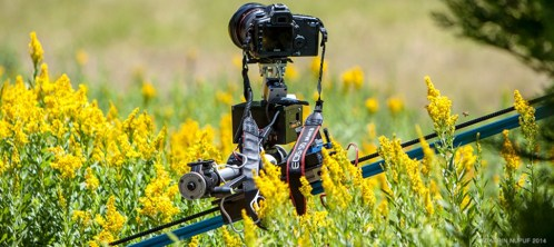 EMOTIMO ON SLIDER IN FIELD OF FLOWERS