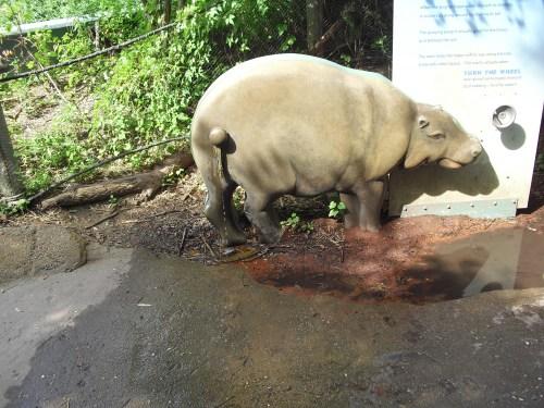 Peeing Hippo