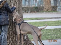 Project Canis - Einzeltraining 3