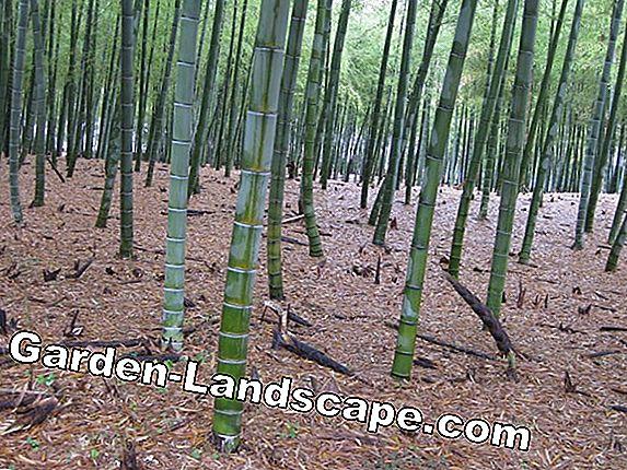 Video Costruire Barriera Rizoma Per Bambù E Te Stesso Alternative