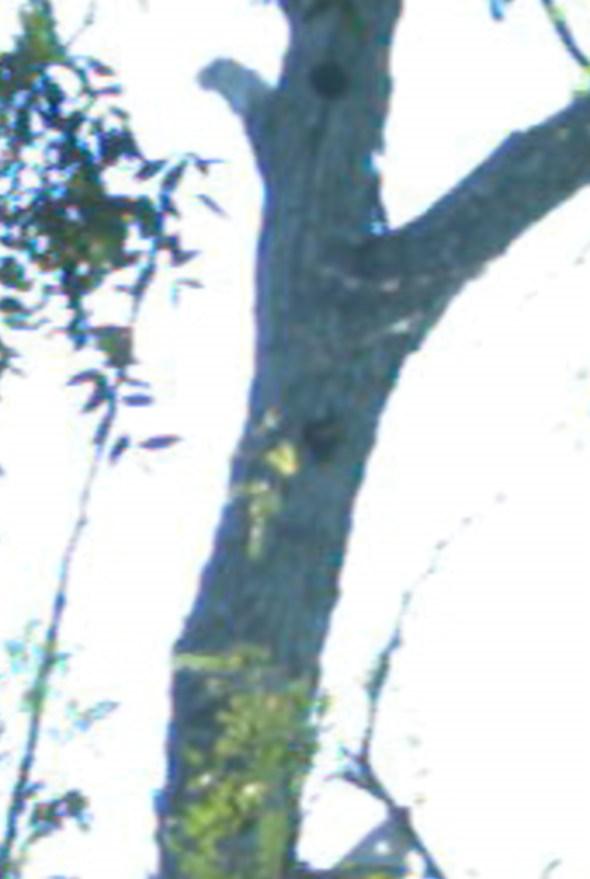 IMG_1096-EditTopaz+processed+neck+bird-2-magic copy