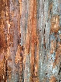 Bark, Alameda, CA