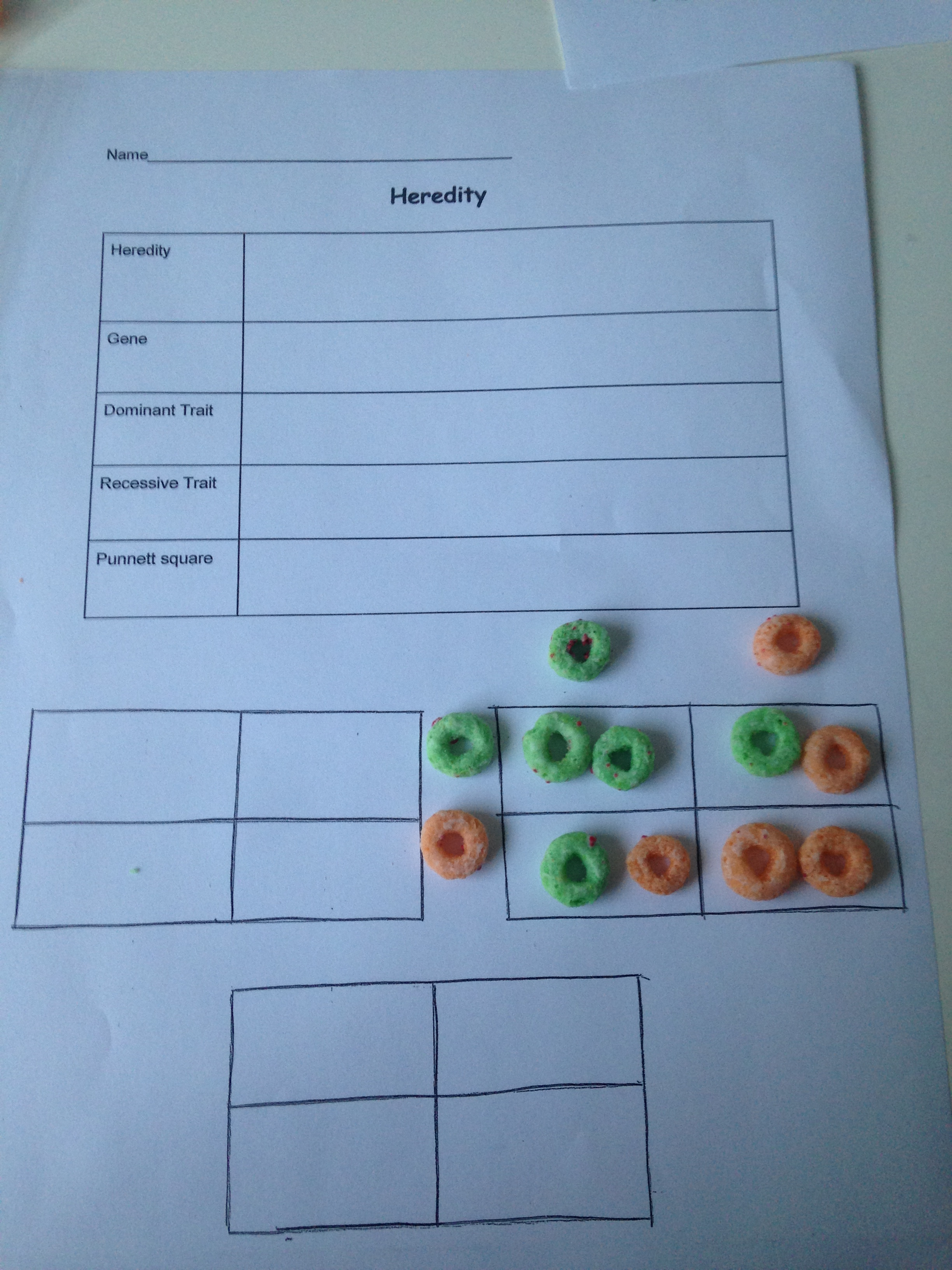 Little Bits Day 4 Heredity And Punnett Squares Project