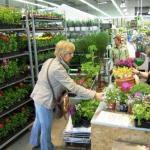 Garden Price 3