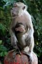 curious monkey 2