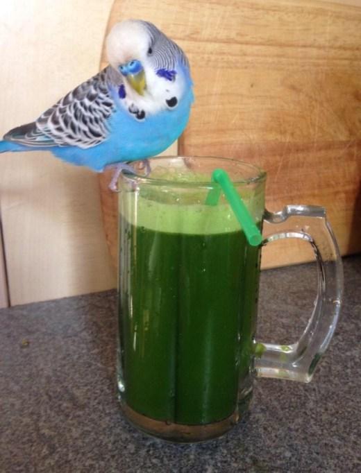 Alan The Healthy Bluebird