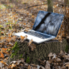 Image of Laptop in the woods