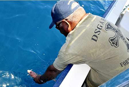 fish release palau