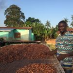 projet agroforesterie cacao ghana