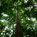 foret tropicale reserve communautaire