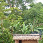 village baka cameroun