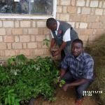 agroforesterie tanzanie