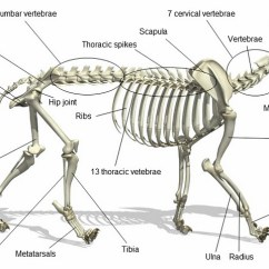 Fetal Pig Skeleton Diagram Jungle Food Web Project Kitty Texas Picture