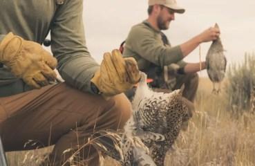 bird hunting in Montana