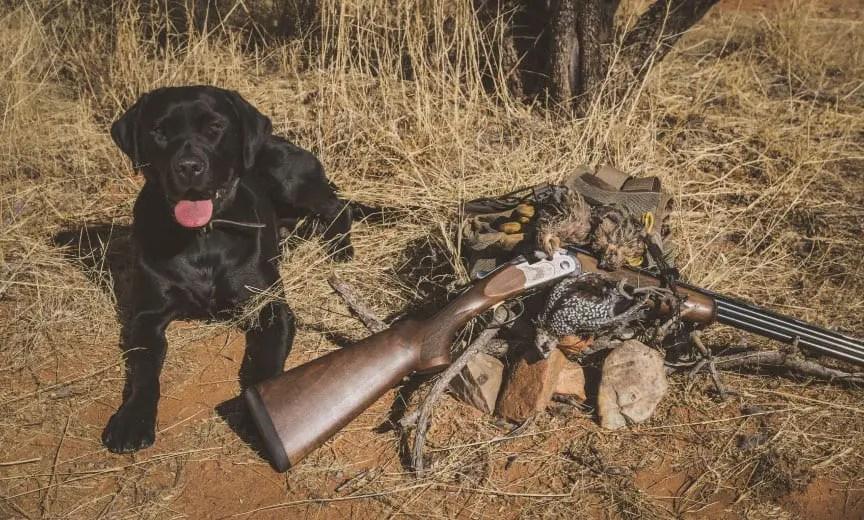 quail hunting in arizona