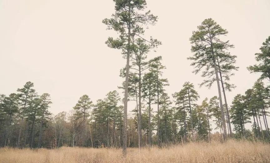 public land for quail hunting