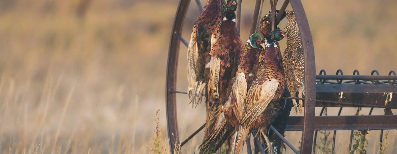 National Upland bird hunting survey