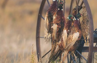National Upland bird hunting survey