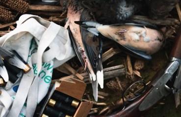 A shotgun with shotgun shells and doves.