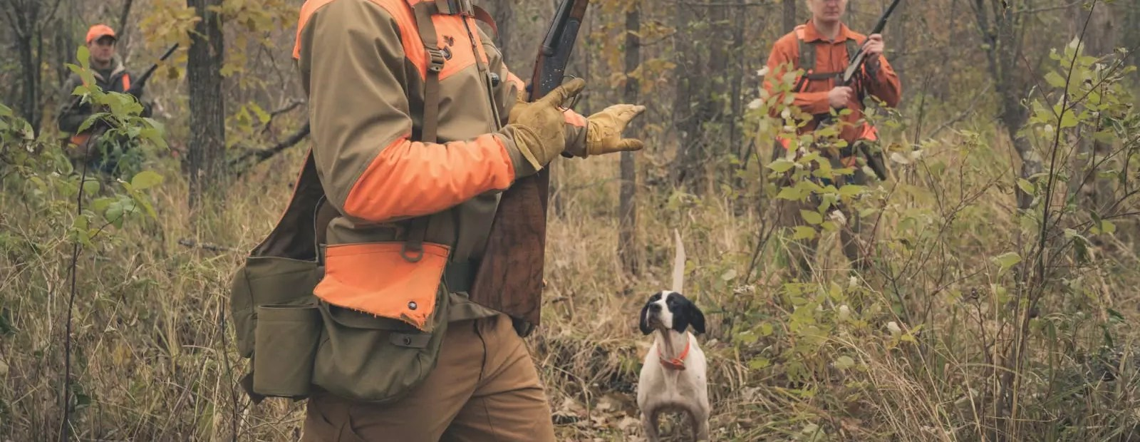 A bird hunter steadies his dog on a woodcock point.