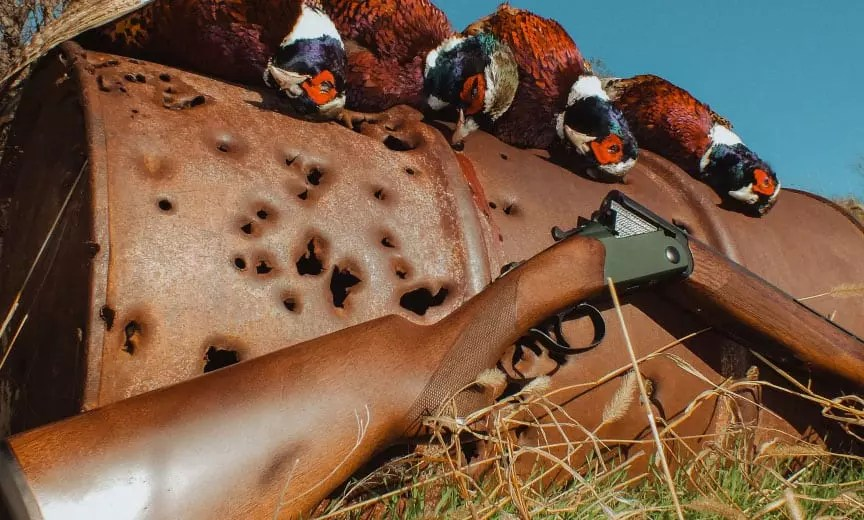 A CZ Upland Ultralight on a pheasant hunt