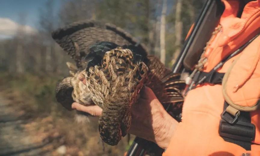 A hunter holds a ruffed grouse