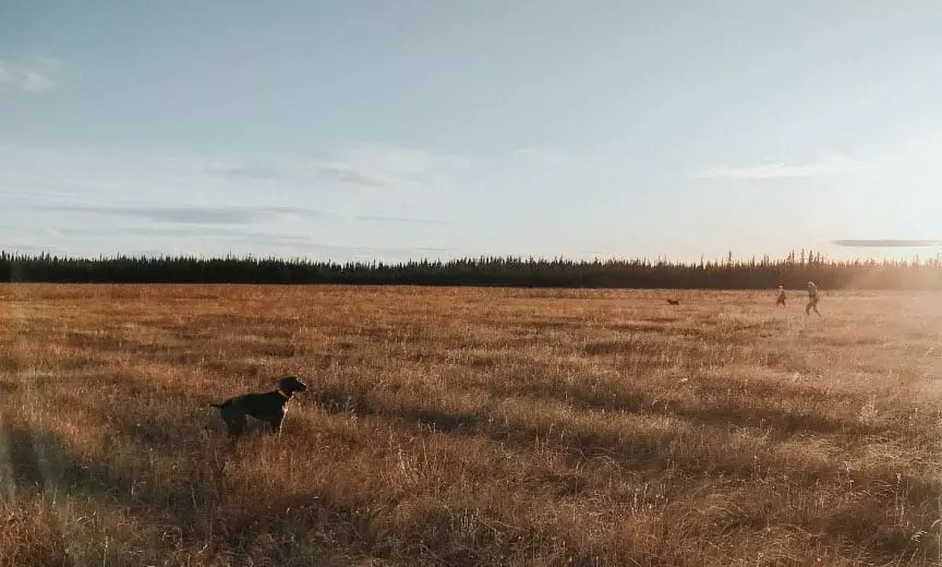 An area in Alaska altered by wild fire which creates sharp-tailed grouse habitat.