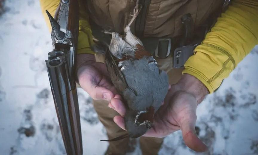 A mountain quail in California