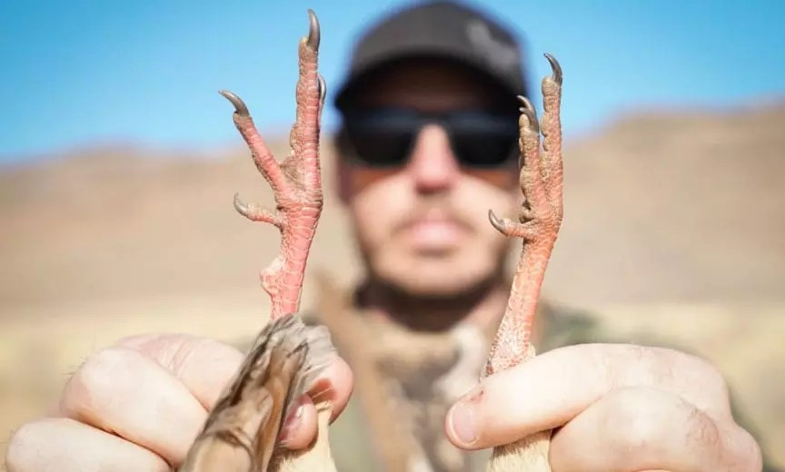 A hunter holds up the red legs of a chukar partridge.