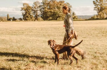 A bird dog trainer works a dog alone in a field