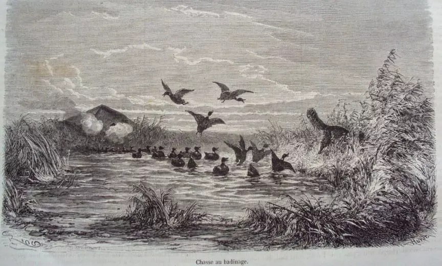 An old image of duck hunters using the duck tolling technique with a Nova Scotia Duck Tolling Retriever.