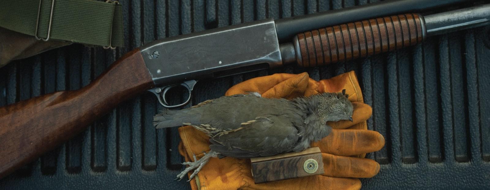 A quail call used during a California quail hunt