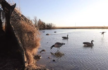 A duck blind beside a spread of decoys for hunting