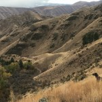A hunting dog looks over the edge of Hells Canyon